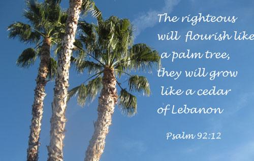 Pray for the peace of jerusalem 3 31 14 prayer for Prayer palm plant