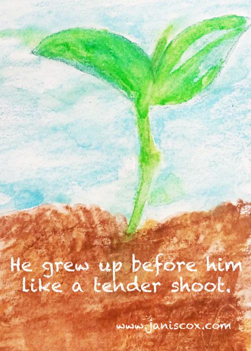 The-Tender-Shoot