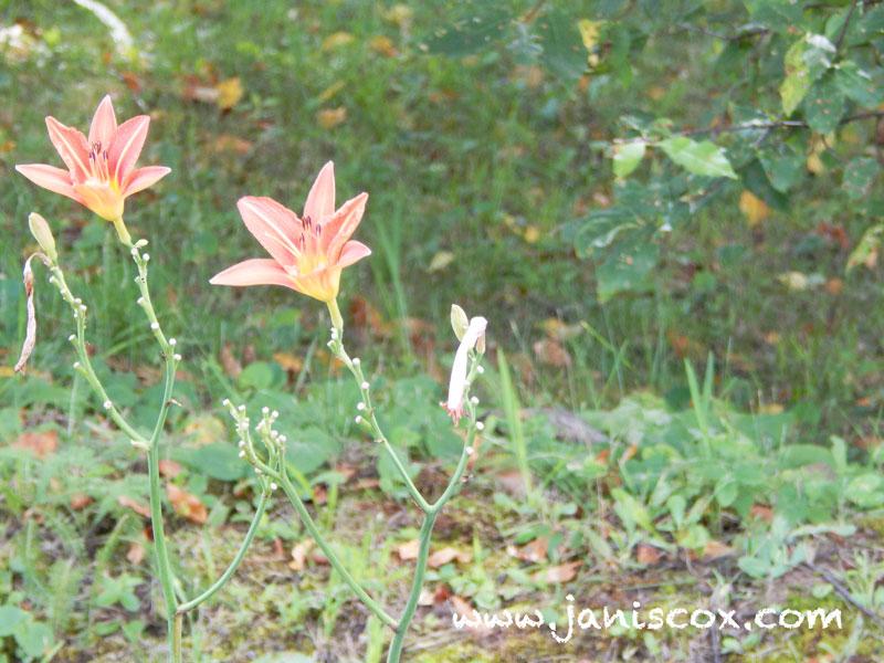 WW1---flowers