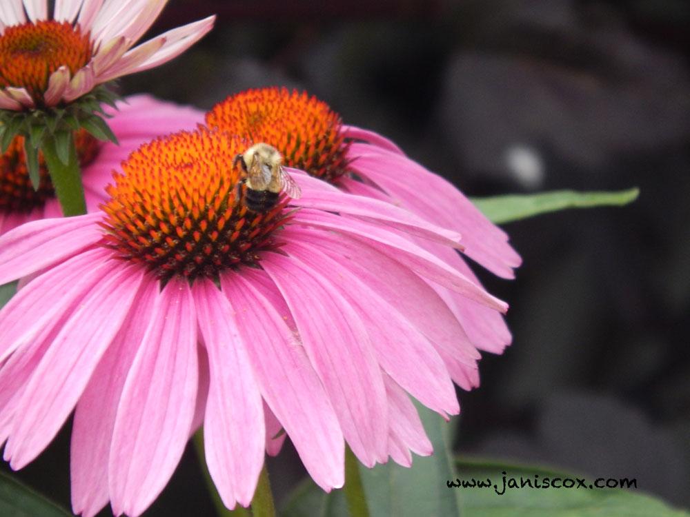 Creation Story - Bumblebee
