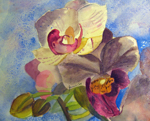 Orchid - Janis Cox